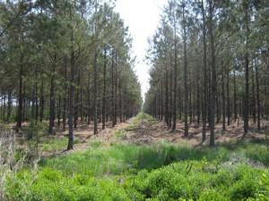 treefarm_mettjr